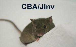CBAJ Revised Thumbnail JPEG