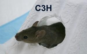 C3H Thumbnail JPEG